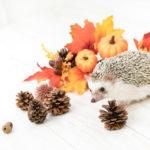 11月10日(土)ー11日(日)、紅葉の季節にリトリートイベント開催です